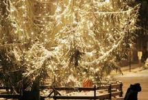 Winter Wonderland / by Molly Imler