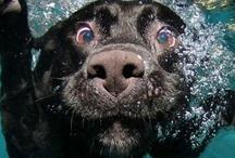 Puppy Love / by Molly Imler