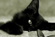 Cats and Dogs / Cats & Dogs / by Shelly Sponseller