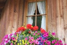 windows / by Nalan Yeter