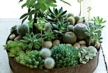 home | garden / by Amanda Roth | ARBR Pictures
