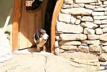 Hound dogs / by Debra Daniels-Zeller