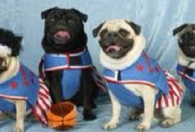 Globetrottin' Animals / Animals and sports. Athletes and animals.  Kind of like peanut butter and jelly, right?  Maybe not, but here is our roster of athlete animals (athletimals) in case we ever put together an all-animal team. / by Harlem Globetrotters
