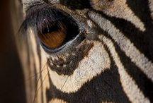 Animal Cuteness ! / by Gwyn Whelband