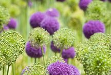 Yard...Gardening and Such / by Jill Singleton
