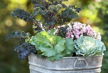 Garden ideas / Plans and plants and plantings for my dream/real gardens / by Sue Webster
