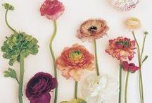 Beautiful Flowers / by Adrian Maryott