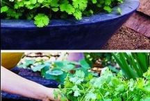 Gardening and Outdoor Living / by Lauren Lown