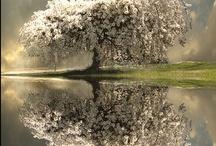 Reflections / by Diane Menneke