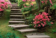Garden / by Brigitte Dilbeck