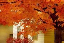 Fall/ Halloween / by Denise S.