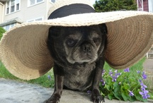 Pugs Pugs Pugs (and other cute doggies) / by Lucy Takes a Trip Vintage