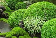 **Garden* / by Michelle Nielsen