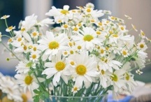 Flowers and Gardens / by Lucy Takes a Trip Vintage