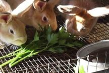 Rabbits / by Elizabeth Baldwin