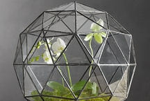 terrarium obsessed / by Amy Allen