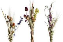Of Botanical Interest  / Regarding Botanicals  / by Adirondack Aromatherapy