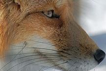 Animals / by Senta