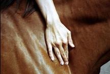 Ventes de chevaux/ horse sales / by deauville