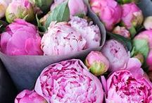 Think Pink / My favorite colore. / by Anne Buehner