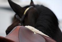 Ponies / by Christina Symanski