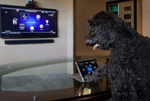 Pets & Technology / Pets posing with different technology. / by Control4