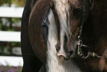 Horses / by Deanna Zesiger Collins