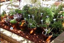 Garden Ideas / by Kimberly Wickstrom