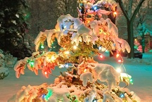 Christmas Tree Inspirations / What is the inspiration behind your christmas tree, who do you decorate with? There are so many themes you could do. Here are some of our favorites.  / by Ornaments and More