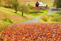 Autumn Joy / by Karen Slate