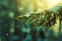 winter. / by Ornaments and More