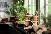 The Potting Shed / Growing plants in pots / by Karen Slate