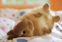 Rabbitry / by Beth Workman