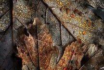 Autumn / by Arielle Schow
