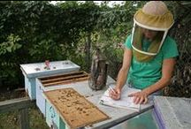 Apiary / by Beth Workman