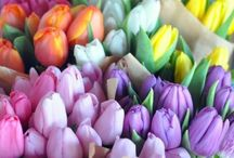 Flowers / by Casey Harrison