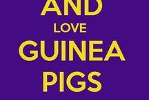 Guinea Pigs / by Marlo Brown