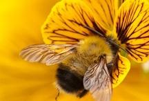 Bee! / by Zaga Cat