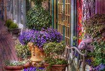 Flower Shops / by Lori Lehman