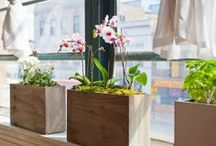 Hydroponic Gardens and Projects / Hydroponics is a branch of agriculture where plants are grown without the use of soil. Their are amazing hydroponic projects popping up all over the world, both indoors and outdoors. These are our favorite projects.  / by Urban Gardens