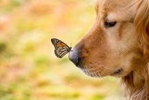 Butterflies / by Sharon Chapman