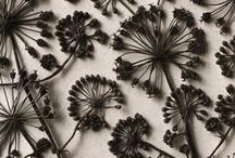 Miscellaneous / by Amanda Atkins