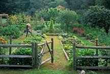 The Secret Garden / by Hannah Hilton