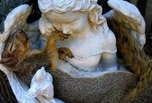 Squirrels / by Summer Ann