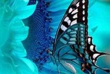 butterflies / by Summer Ann