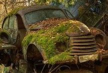 Discarded, Unwanted, Abandoned / by Pat Kossler