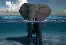 animals / by Elizabeth Gillespie