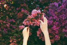 flora / by Amanda Kerzman