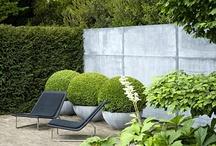 Garden Design / by Donna Stanish