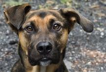 I'm a Dog Stuff / by Jeffry Manion